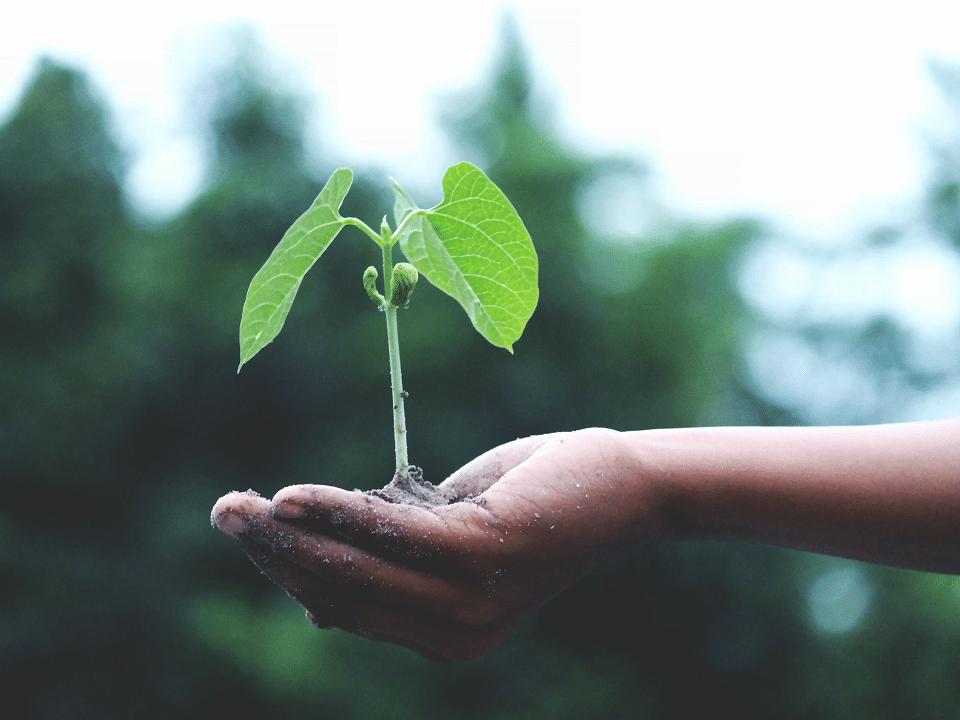 La sostenibilità al centro